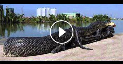 WORLD BIGGEST SNAKE FOUND DEAD IN RED SEA