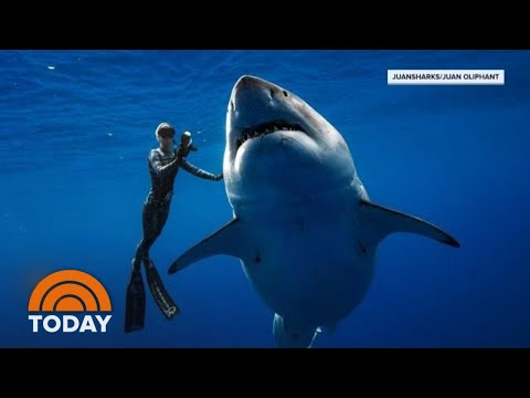 The Truth About Great White Sharks, 30 Years After 'Jaws