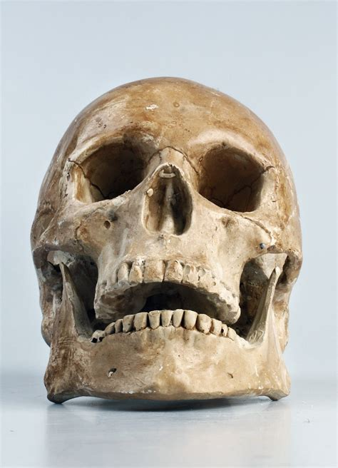 Free Images : color, clothing, skull, bone, face, head