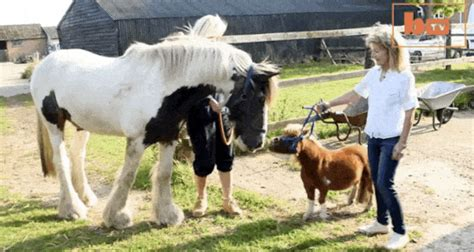 Tiny Horse Thinks He's a Dog: Watch Him Walk and Cuddle